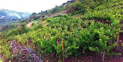 Vins Falguières, Domaine des Boissières
