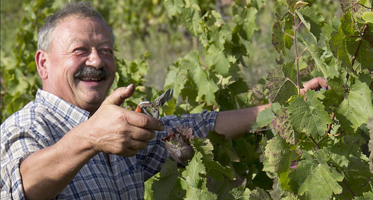 Vins Falguières, Domaine Matha