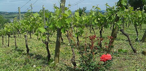 Vins falguières, Domaine du Grès
