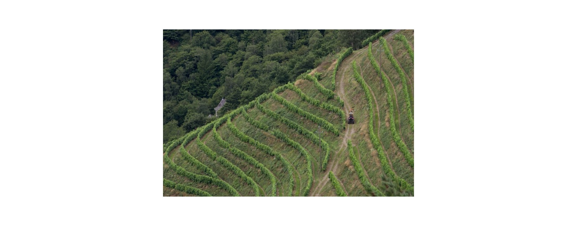 Vins et vignobles de l'Aveyron, témoignage de très anciennes traditions